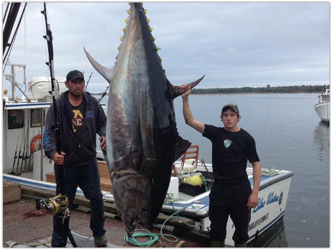 Misty blue waters pei deep sea fishing phone for Tuna fishing season